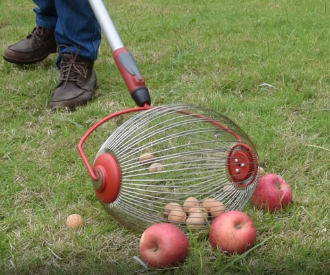 Nut Roller Collecting fruits